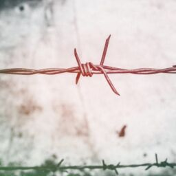 barb-wires-barbed-wire-blur-border-593101