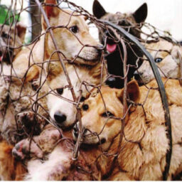 CRUELTY OF THE VOICELESS